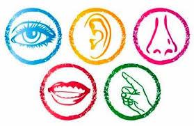 . PlusPng.com physical sense organs senses - Sense Organs PNG