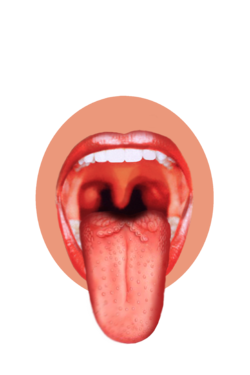 pin Tongue clipart sensory organ #14 - Sense Organs PNG
