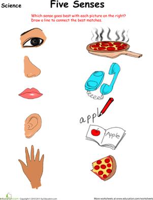 Preschool Science Worksheets: Sort Out the Five Senses - Sense Organs PNG