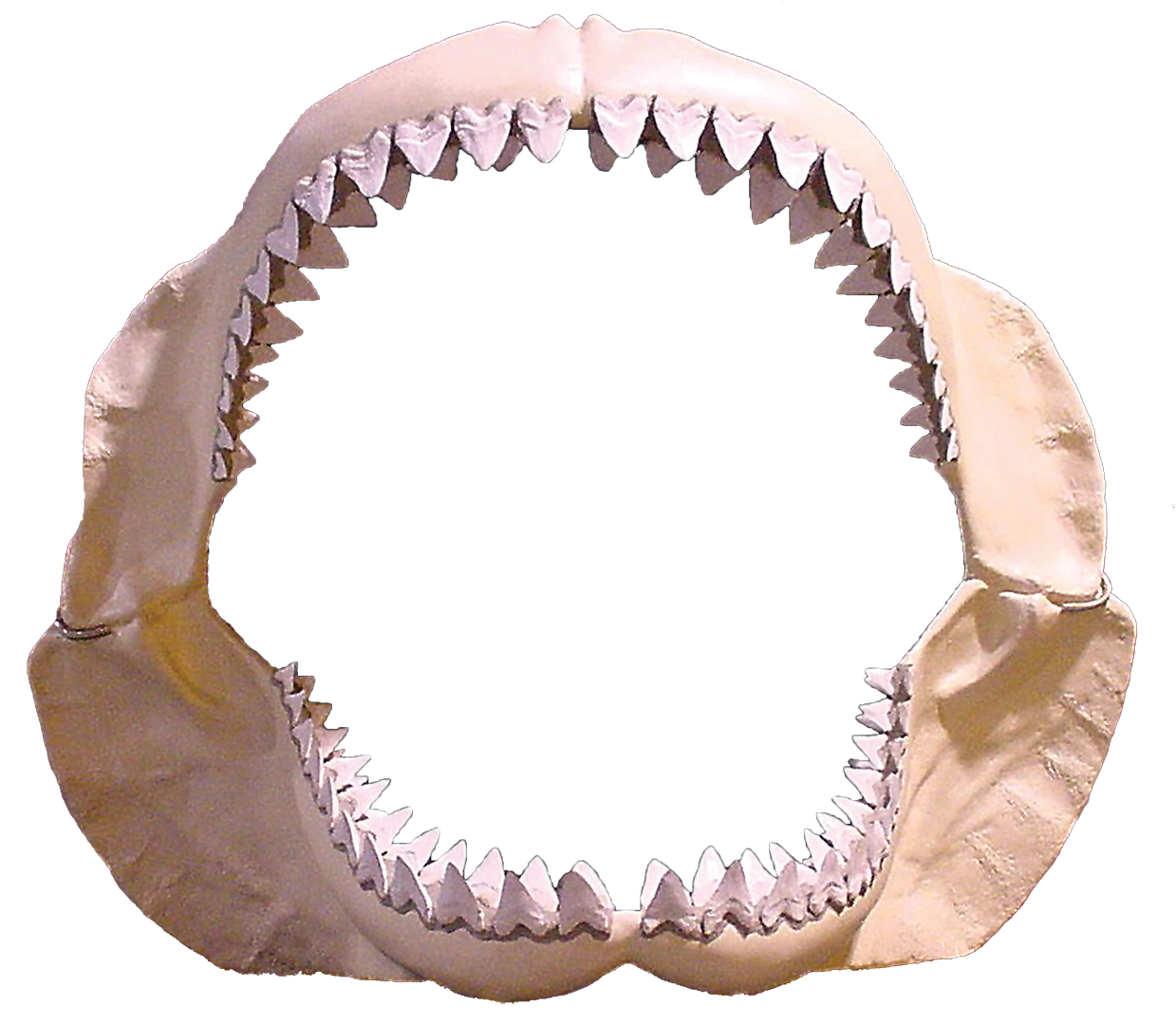. PlusPng.com c-Shark Jaws At