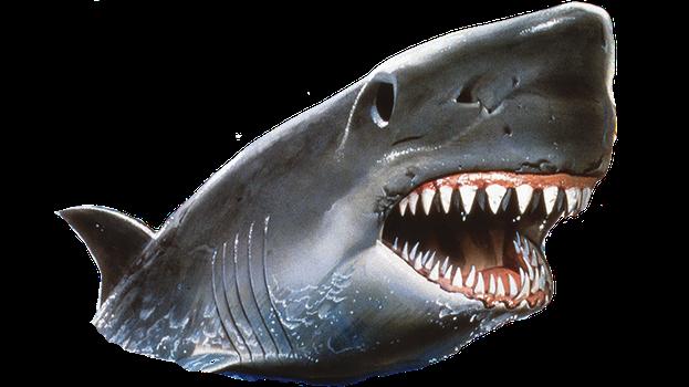 slider image PlusPng.com  - Shark Jaws PNG