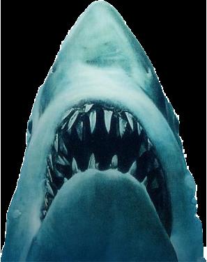 Shark Jaws PNG - 49144