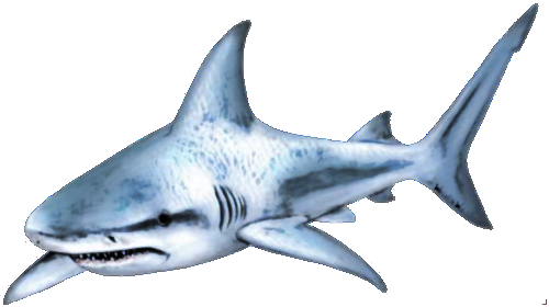 Shark PNG - 8656