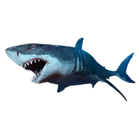 Shark PNG - 25678