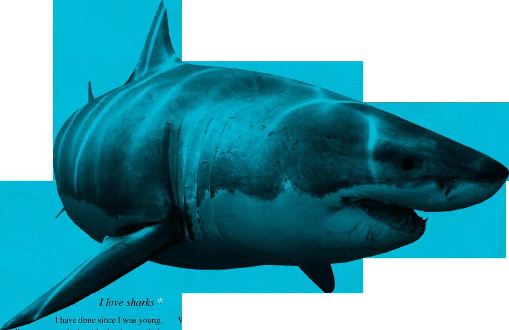 Shark PNG - 25679