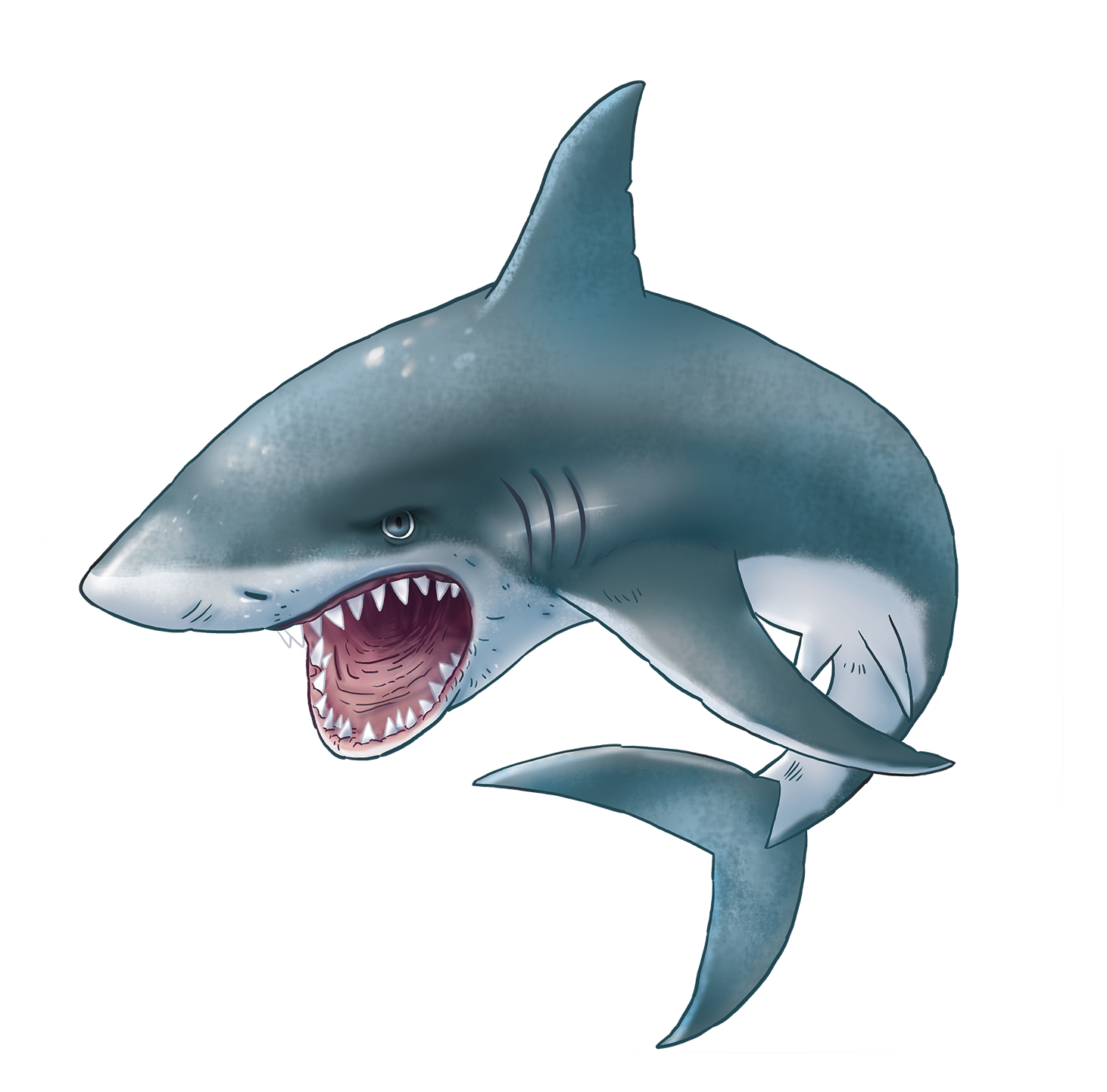 Shark PNG - 25680