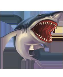 Shark PNG - 8653