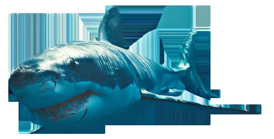 Shark PNG - 25682
