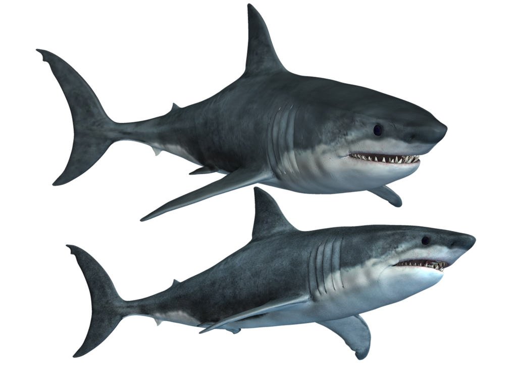 Shark Png Hd PNG Image - Shark PNG
