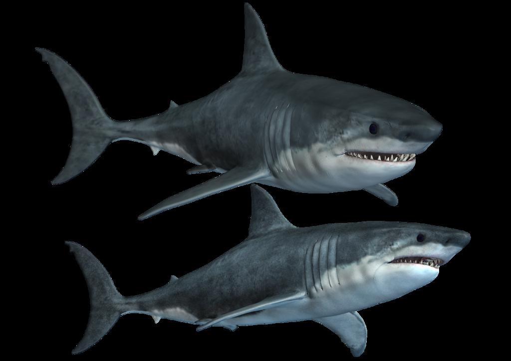 Shark PNG - 25687
