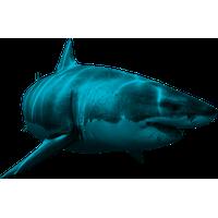 Shark PNG - 25676