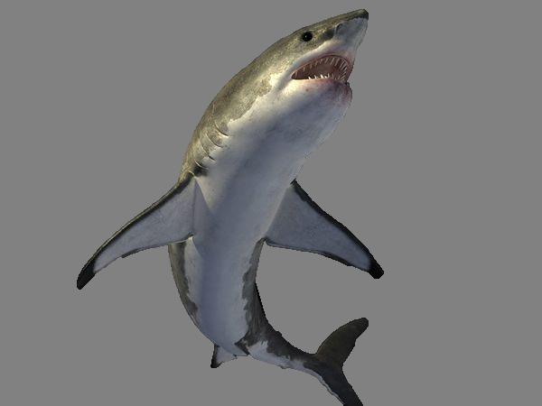 Shark PNG - 25673
