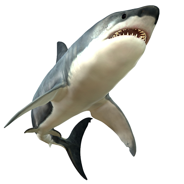 sharks are carnivores . PlusPng.com pic source - Shark PNG