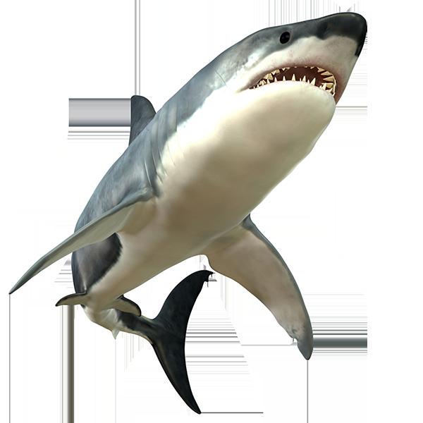 Shark PNG - 8651