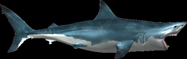 White Shark Png image #42756 - Shark PNG