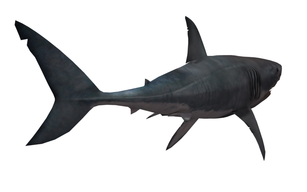 Shark PNG - 8652