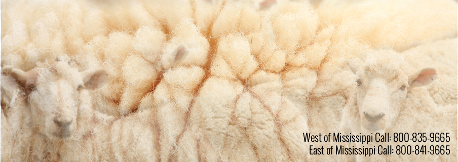 American Sheep Industry - Sheep And Wool PNG