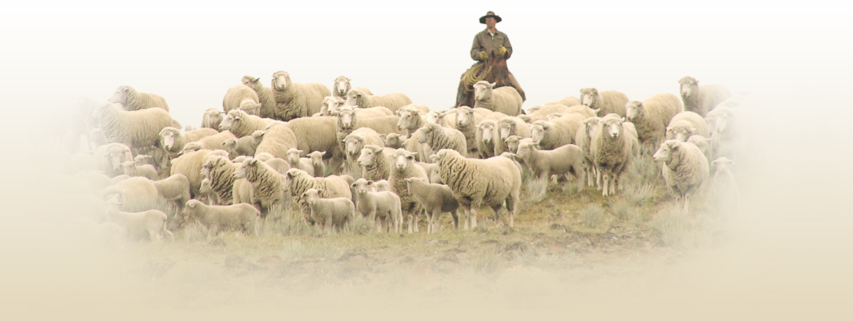 As A Spinoff Of The Historic Imperial Stock Ranch, Imperial Yarn Was Born,  And Began A Journey Which Culminated In Five Market Channels And The  Olympic PlusPng.com  - Sheep And Wool PNG