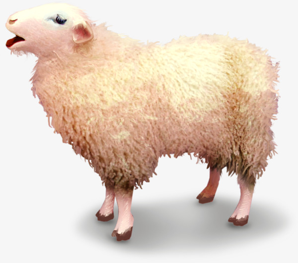 hand-painted sheep, Sheep, Cartoon, Wool PNG Image and Clipart - Sheep And Wool PNG