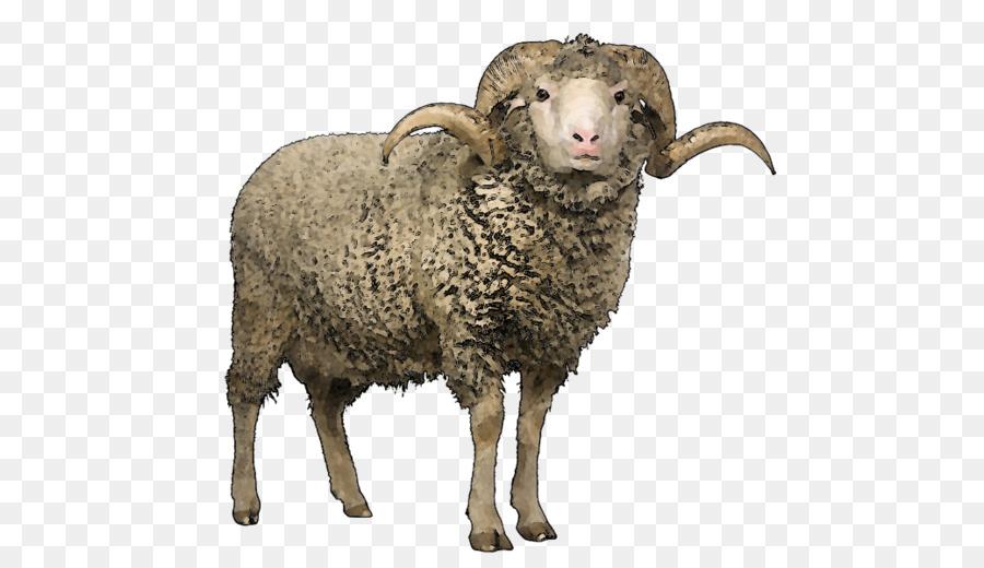 Merino Scottish Blackface Wool Stock Photography Sheep Shearing - Sheep PNG  Image - Sheep And Wool PNG