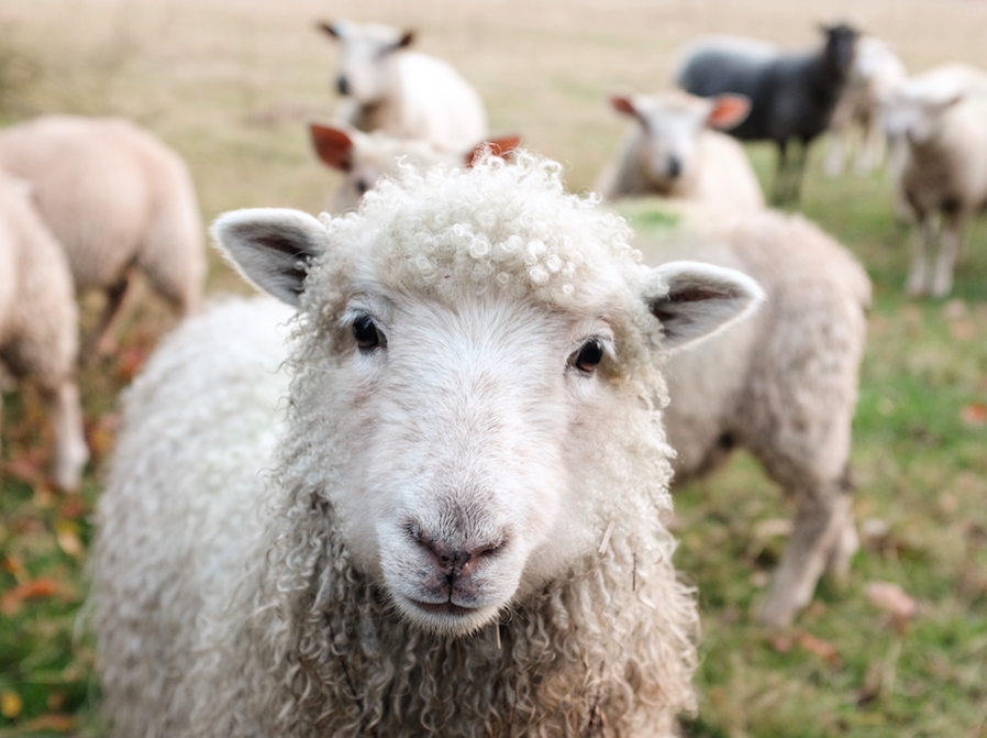 Our 100% sheep wool insulatio