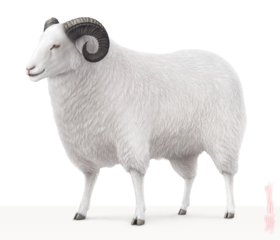 Sheep By Woodvile PlusPng.com  - Sheep HD PNG