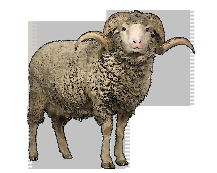 Sheep PNG - 6531
