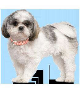 Kansas City Small Dog Rescue