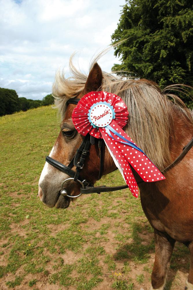 DIY für Haustiere: Siegerschleife für Ponys - Siegerschleife PNG