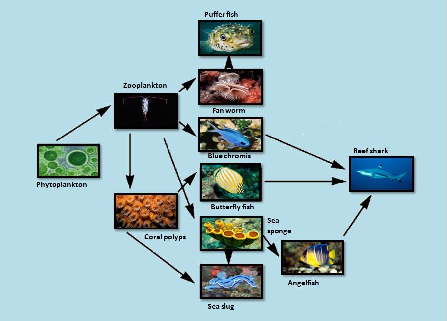 Simple Coral Reef PNG-PlusPNG.com-902 - Simple Coral Reef PNG