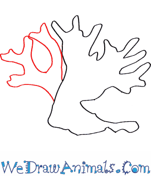 300x350 How to Draw a Fire Coral - Simple Coral Reef PNG