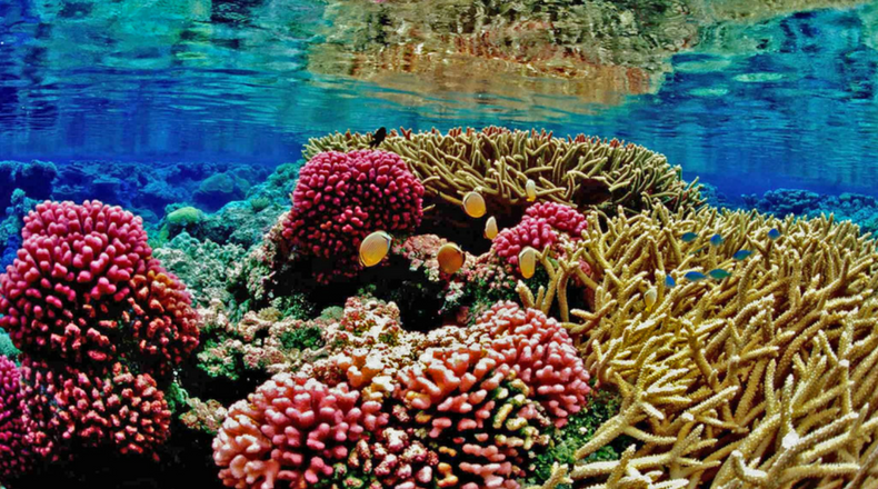 Why Coral Reefs Are Important - Simple Coral Reef PNG