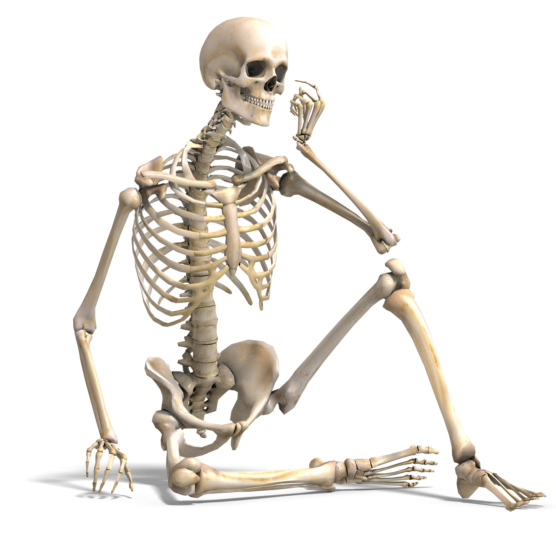 Skeletal System PNG HD - 120464