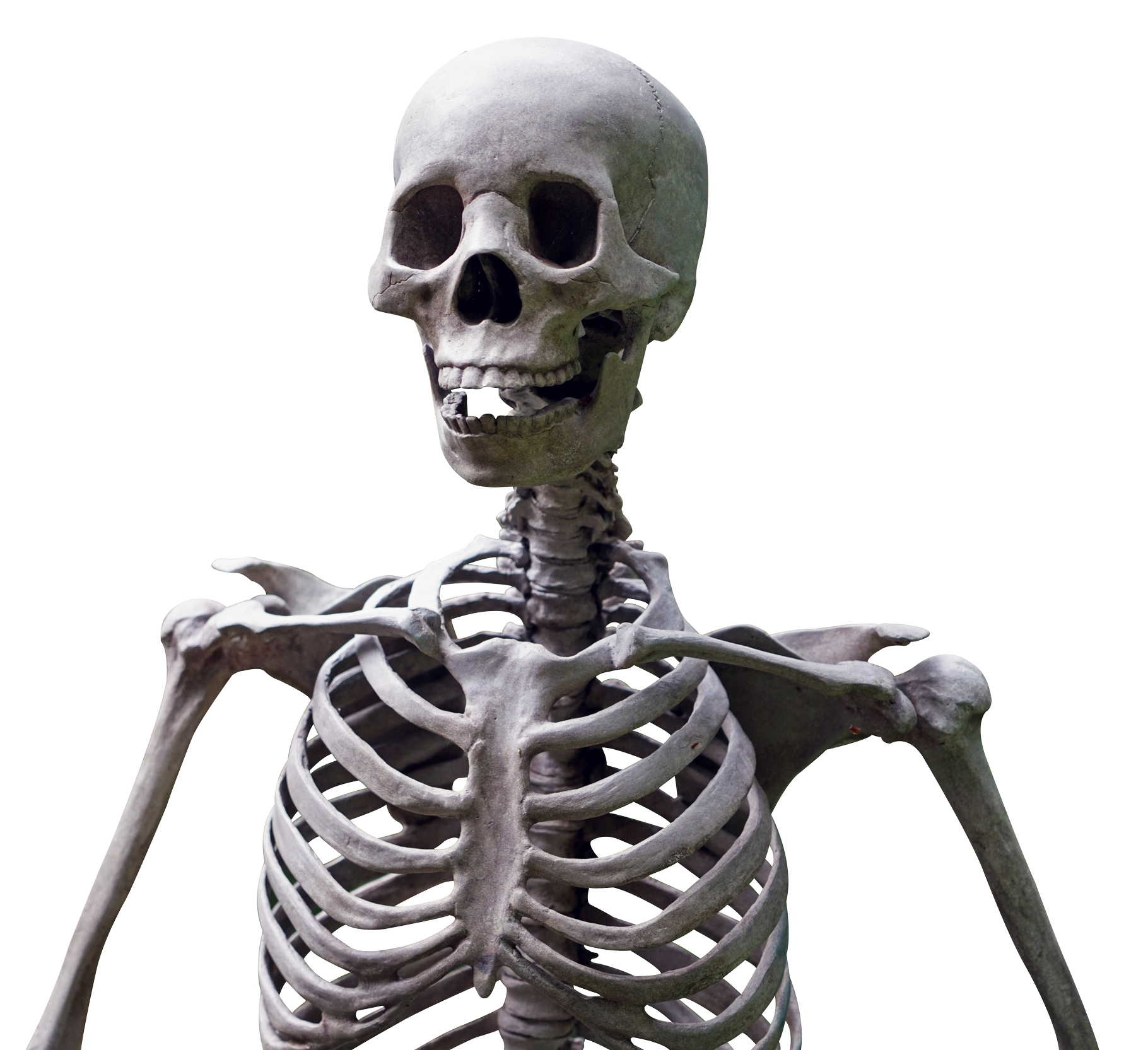 Skeleton HD PNG-PlusPNG.com-1820 - Skeleton HD PNG