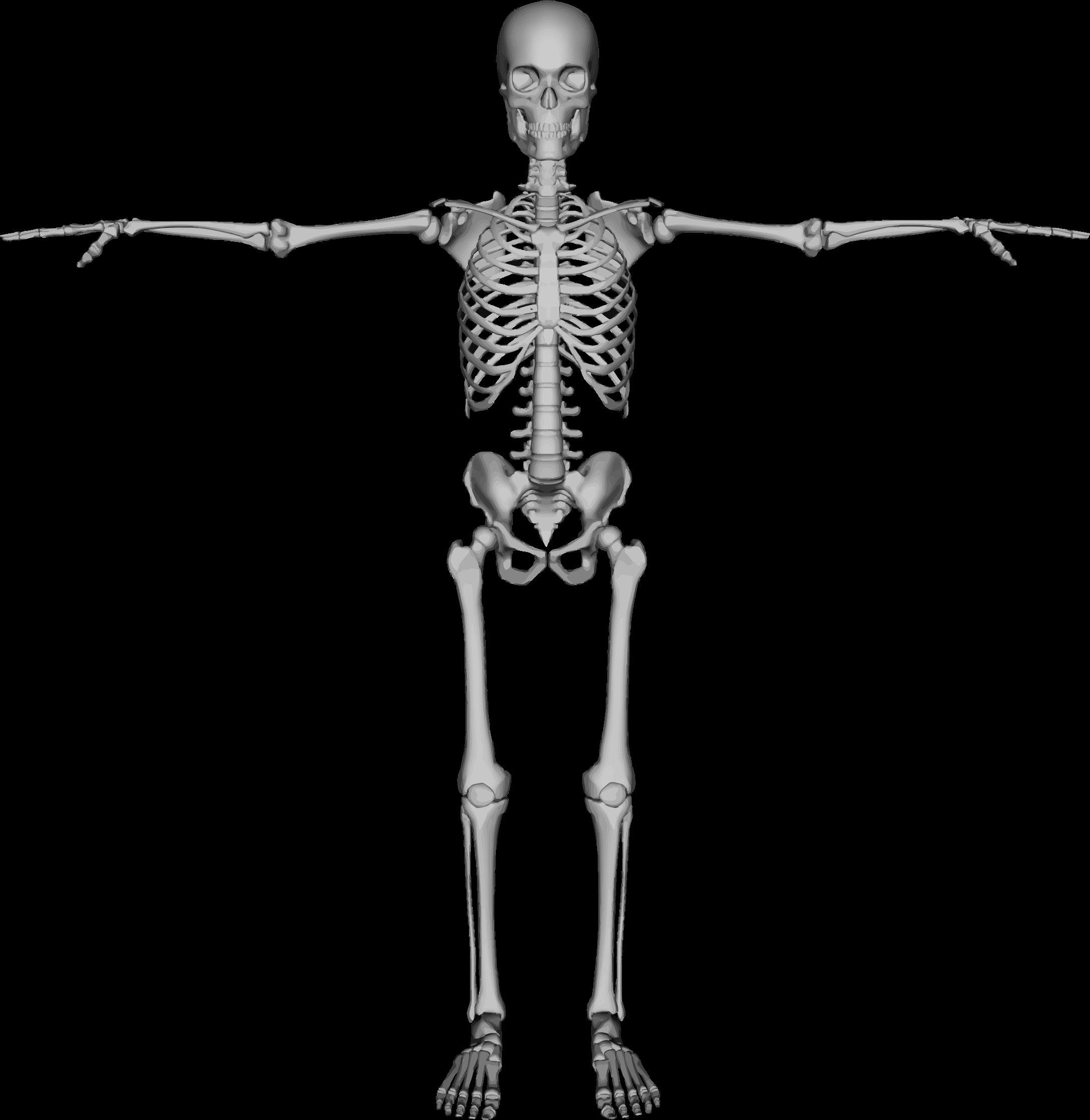 BIG IMAGE (PNG) - Skeleton HD PNG