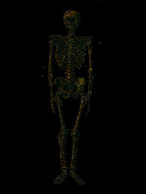 Skeleton HD PNG - 91950
