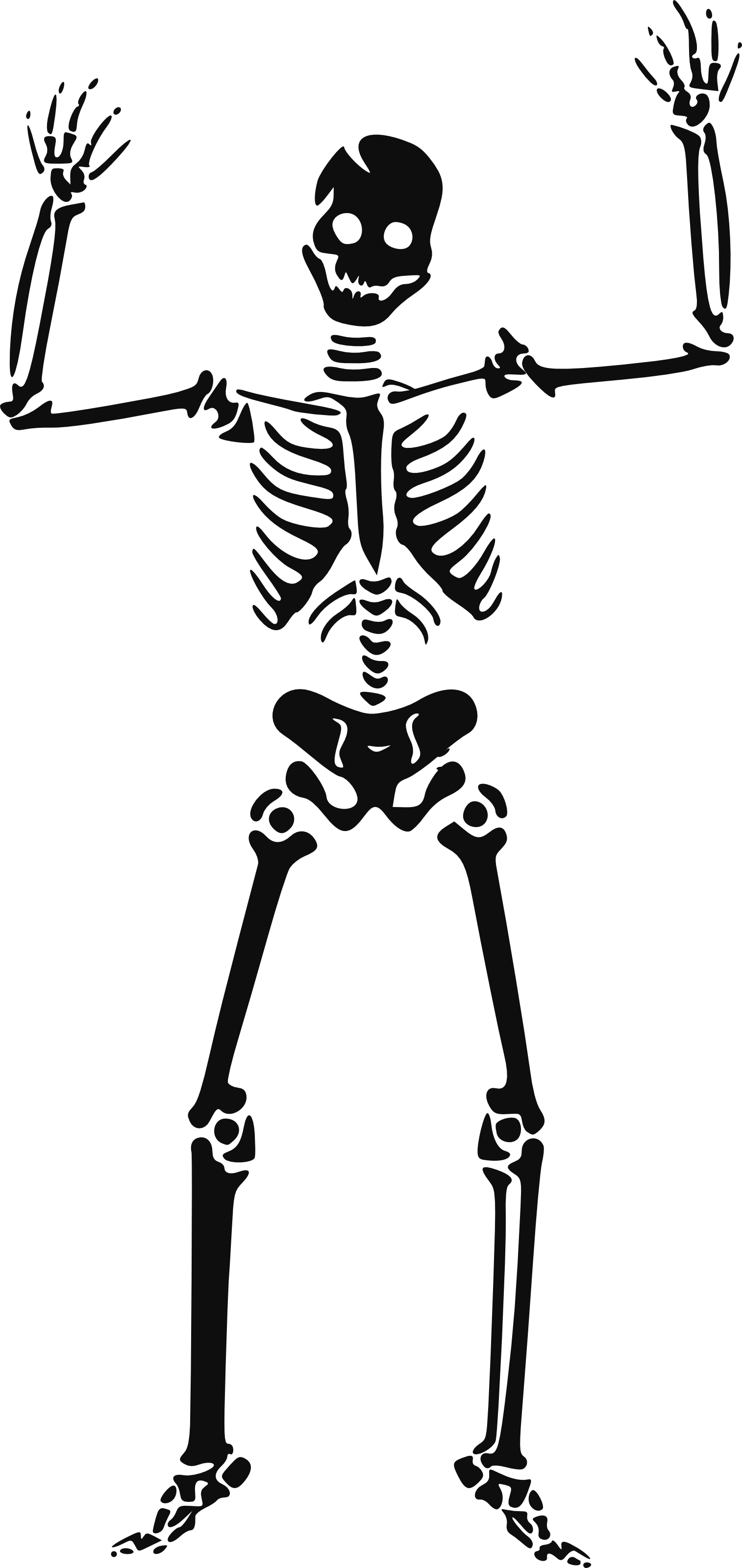 Halloween Skeleton PNG HD - Skeleton HD PNG