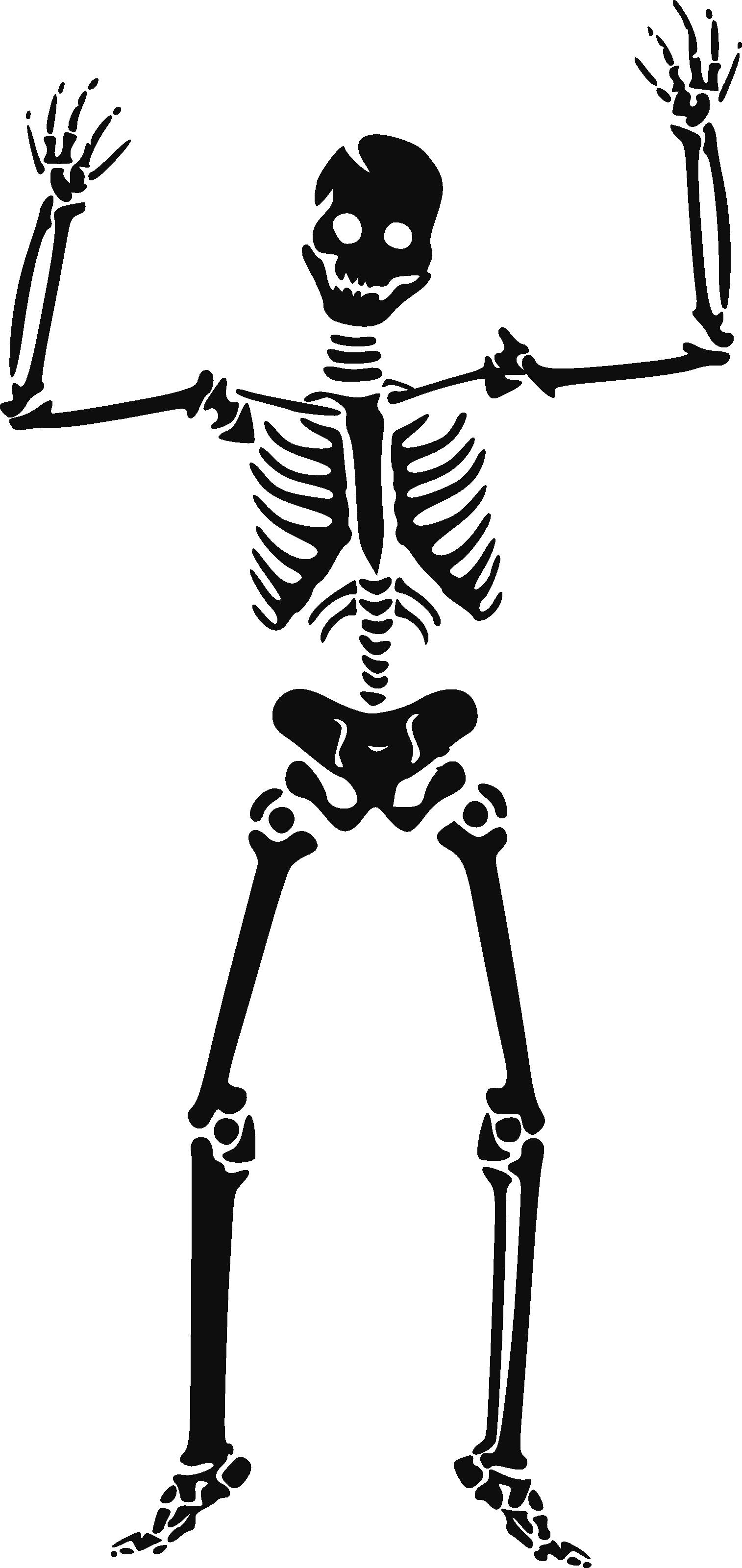 Skeleton HD PNG - 91945