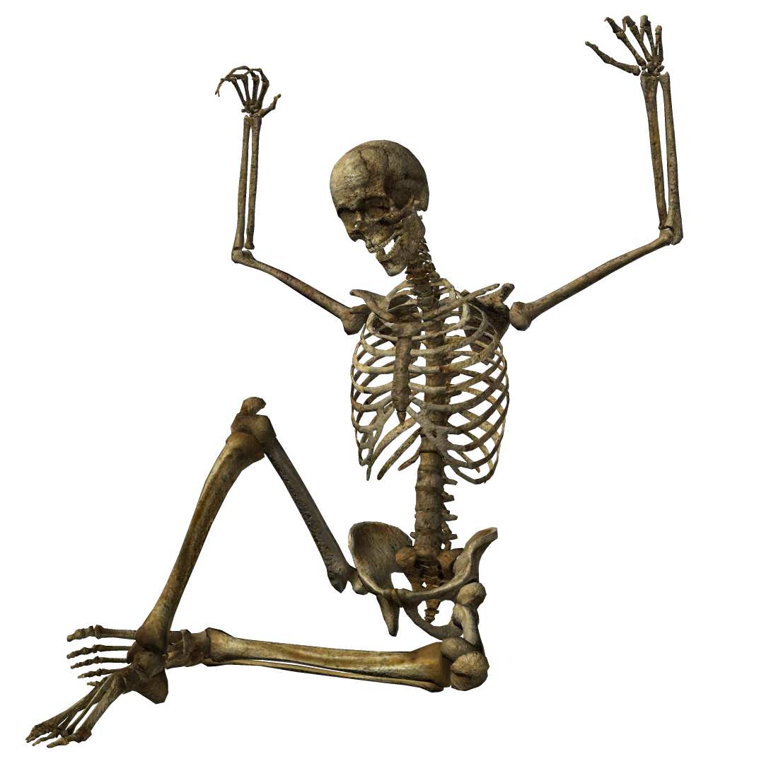Halloween Skeleton PNG Pic - Skeleton HD PNG