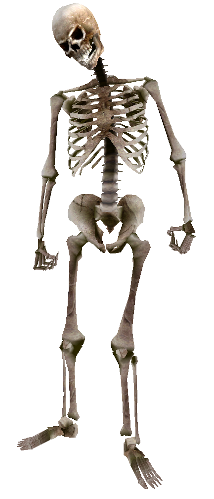 Image - Beast oblivion skeleton.png | Elder Scrolls | FANDOM powered by  Wikia - Skeleton HD PNG