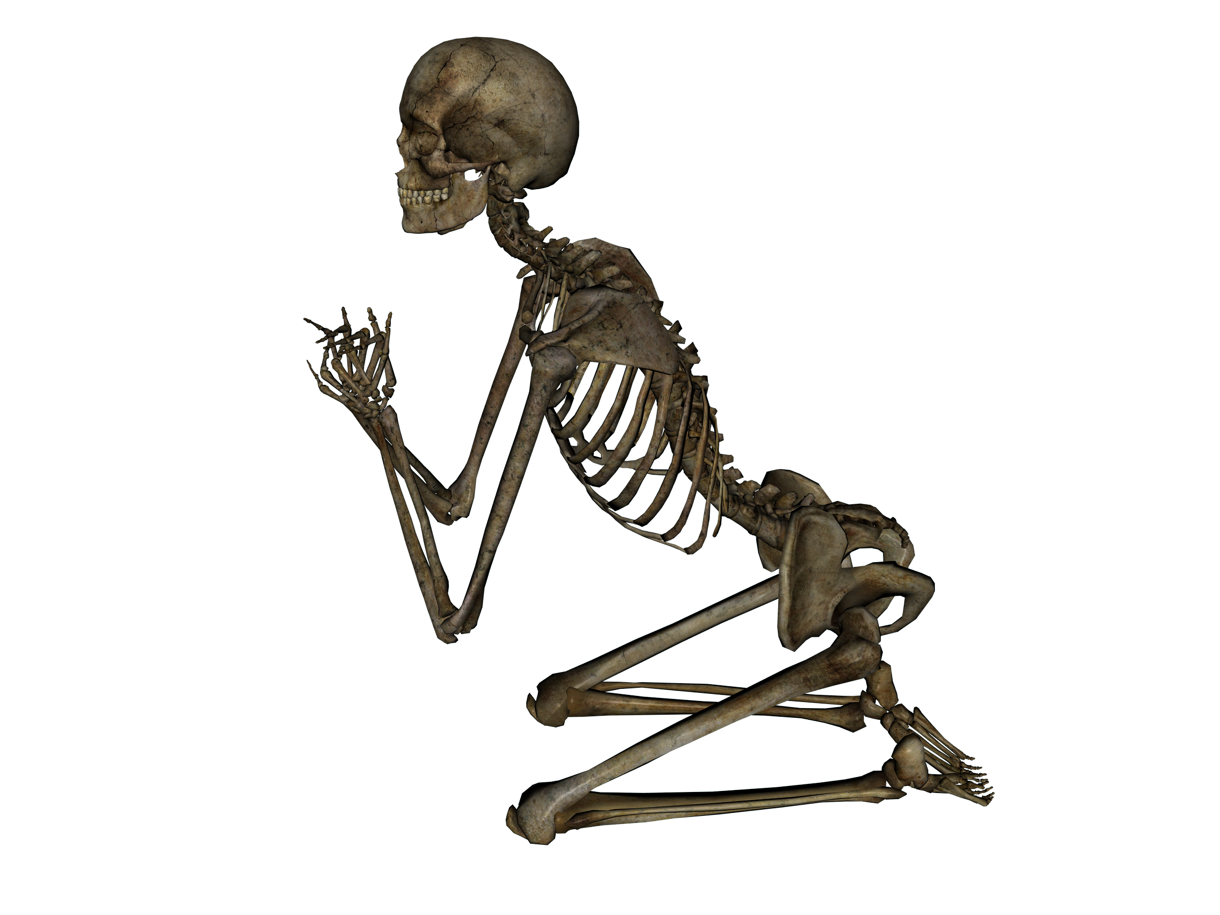 Skeleton PNG image - Skeleton HD PNG