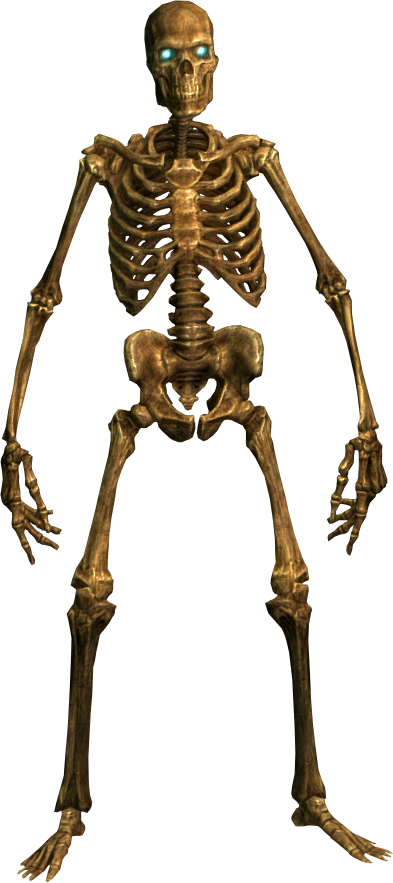 Halloween Skeleton PNG HD