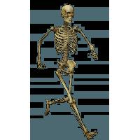 Skeleton HD PNG - 91942