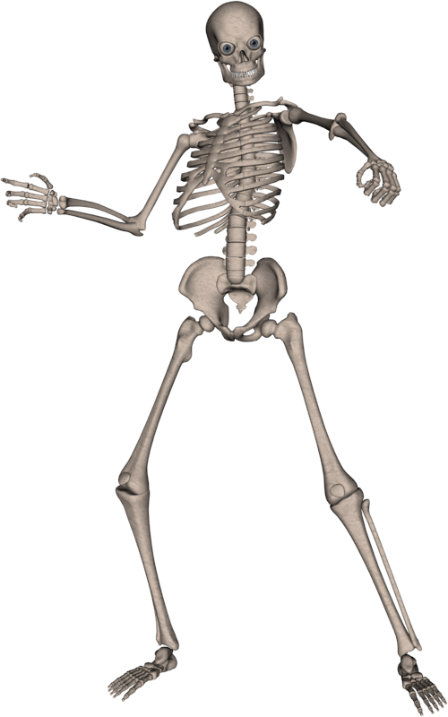 Skeleton HD PNG - 91947