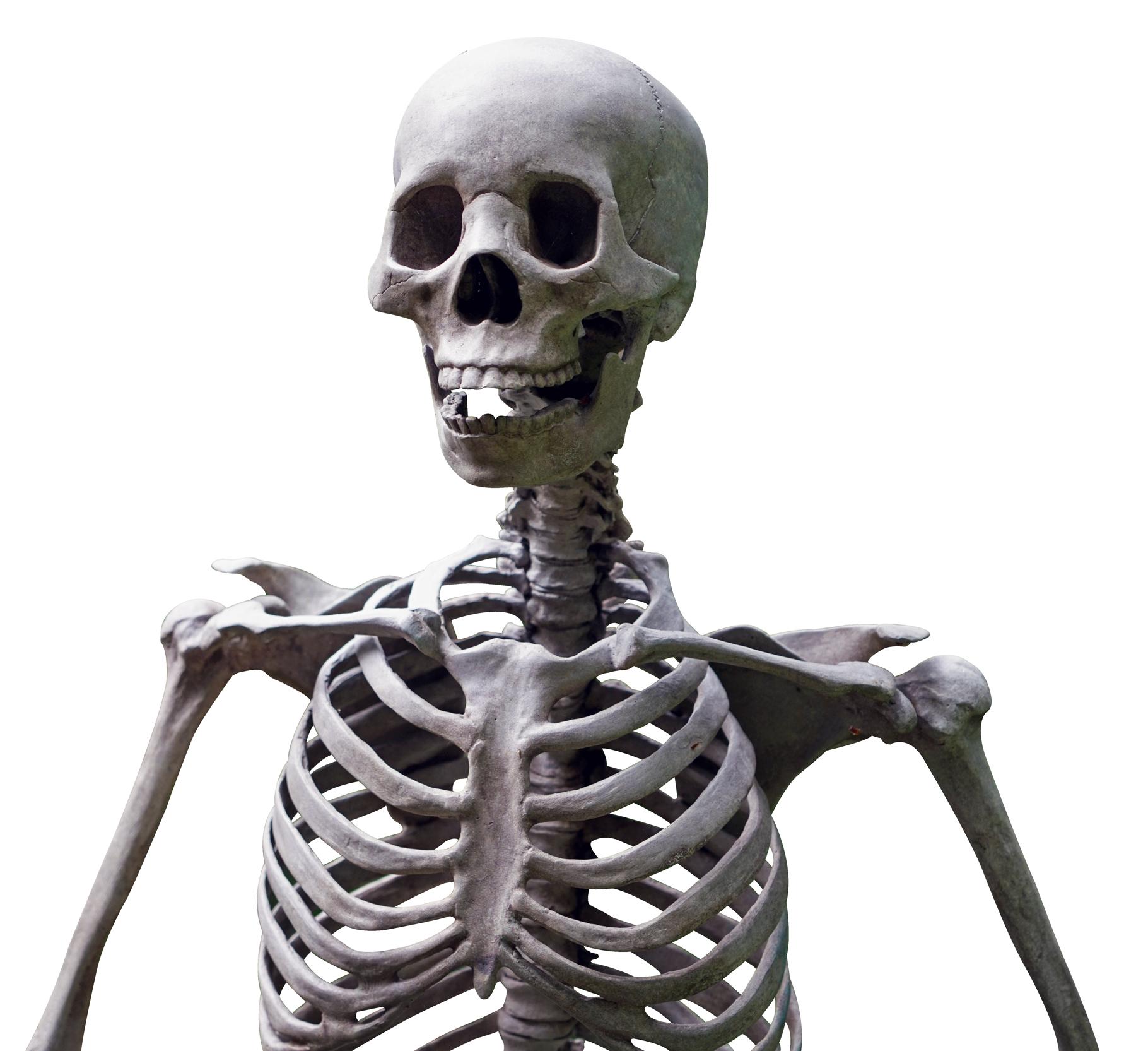 Skeleton PNG - 16862