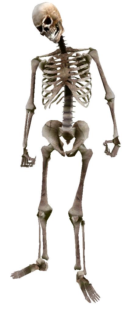 Skeleton PNG - 16869