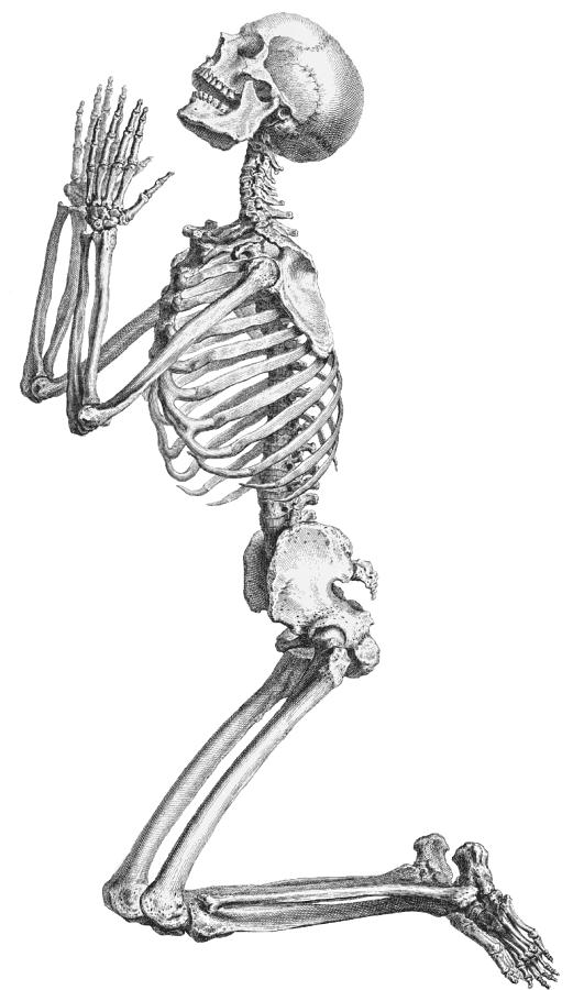 Skeleton PNG - 16866