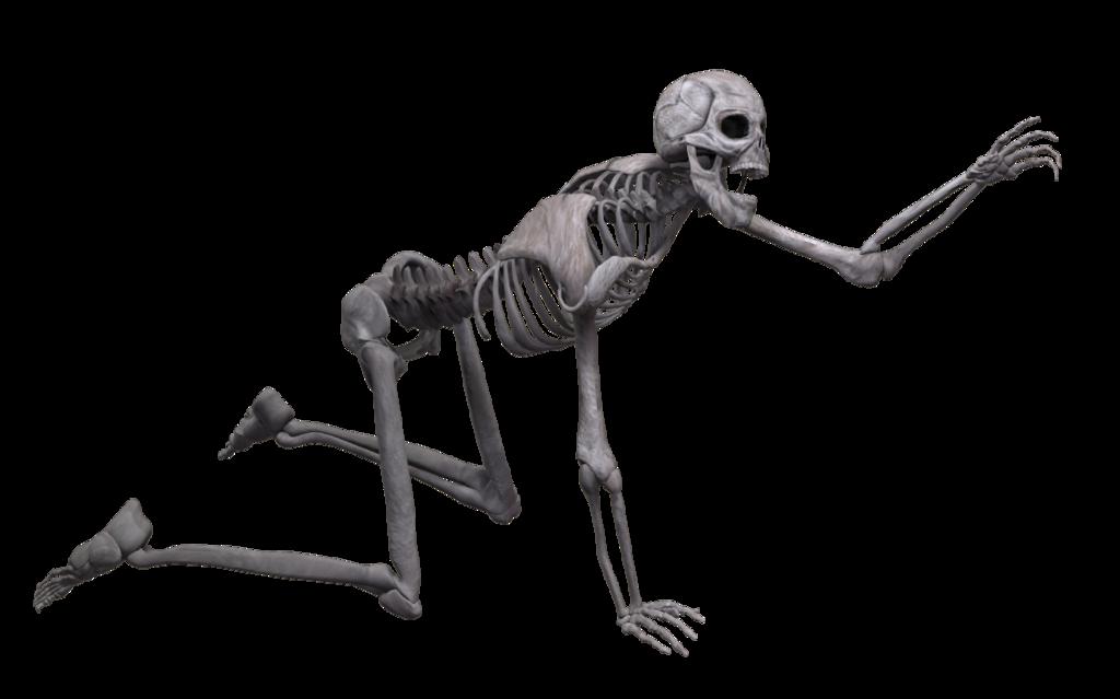 Skeleton PNG - 16873