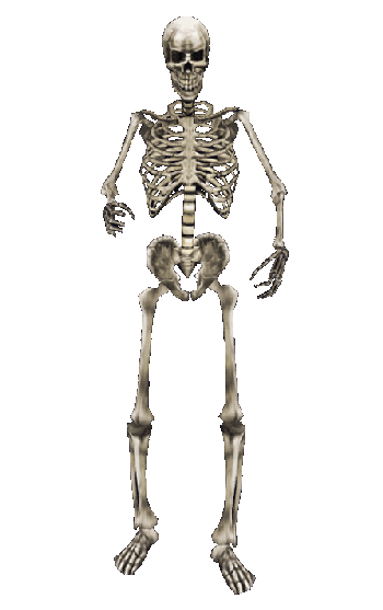 Skeleton PNG - 16864