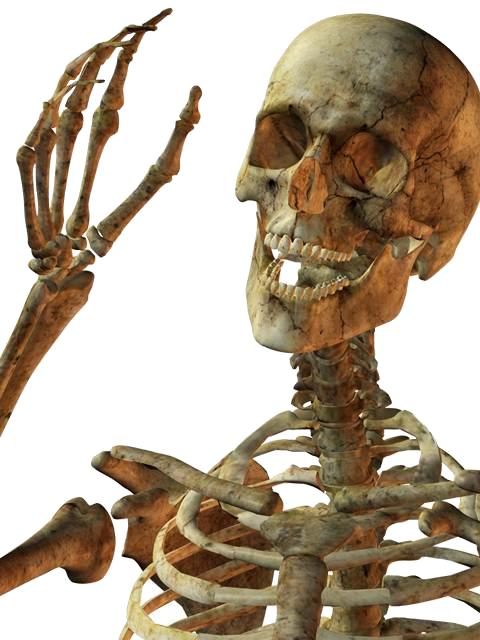 Skeleton PNG - 16861